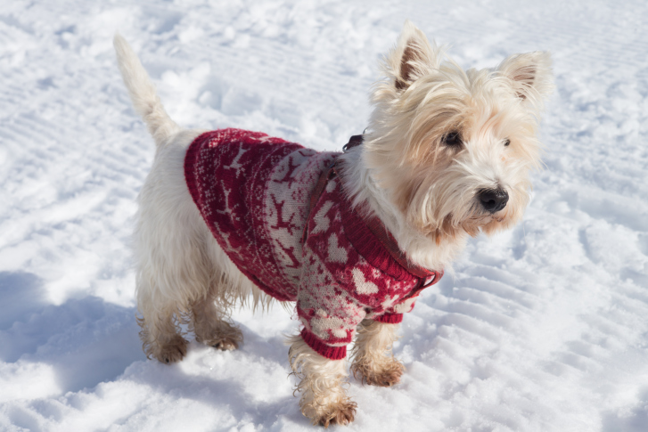 Four Winter Tips for Your Four-legged Friends