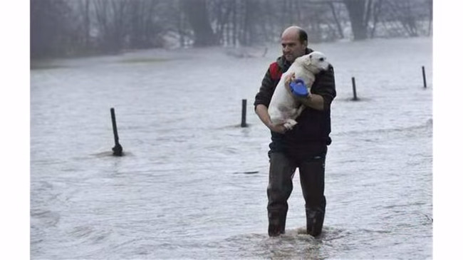 4 Ways to Help Pets Through Severe Weather