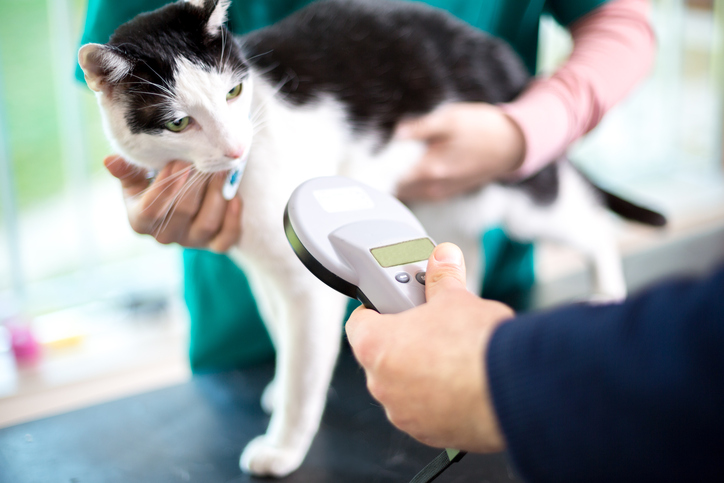 Moving? Don't Forget to Update Your Pet's Microchip